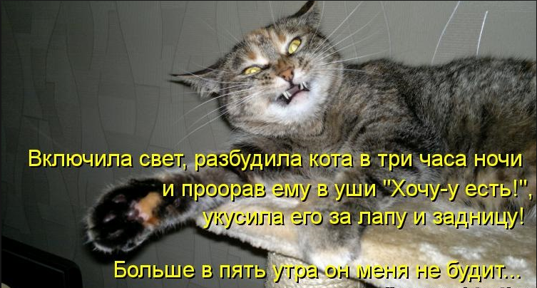 Почему кот утром будит нас