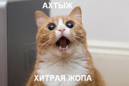 Кот встает ночью