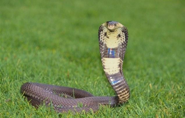 Змеиный хвост в пизде