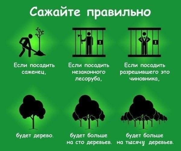 В марте запланирован всеукраинский марафон по высадке 10 млн деревьев в течение недели, - Минэнергетики - Цензор.НЕТ 3181