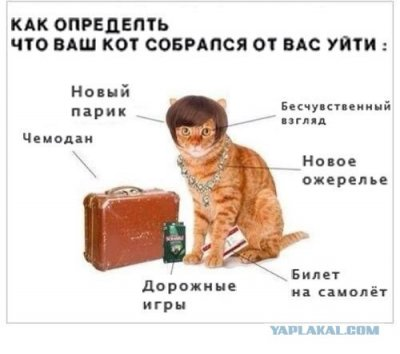 https://cs6.pikabu.ru/images/previews_comm/2014-03_5/13954302566673.jpg
