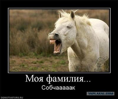 порно конь с девкой фото