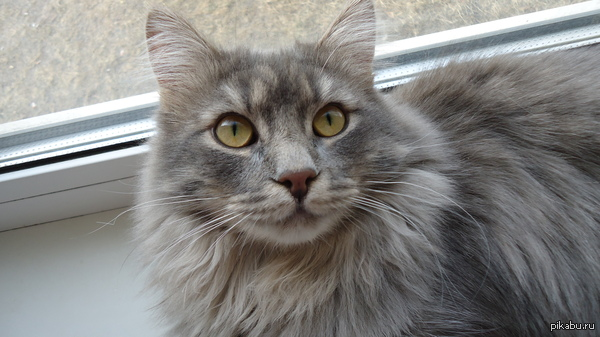 Всем любителям котиков посвящается!