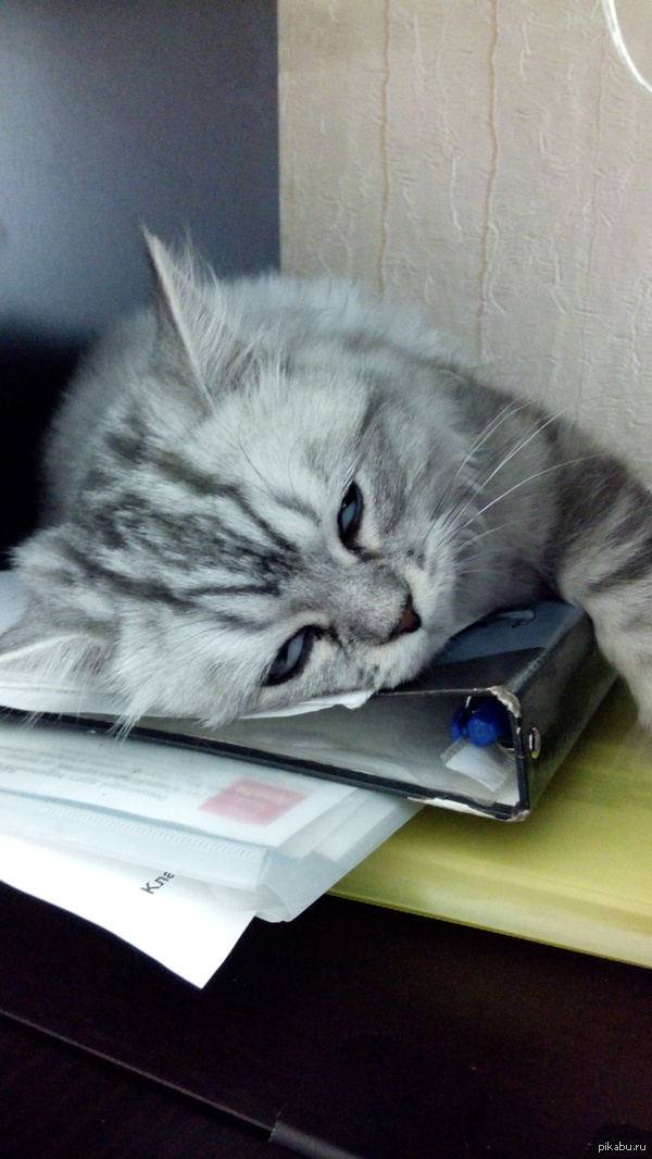 Просто моя кошка Нет, она не мертва, и не под наркотой :D просто мило спит^^