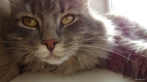 Просто мой кот Ещё одна фотка моего упоротого кота