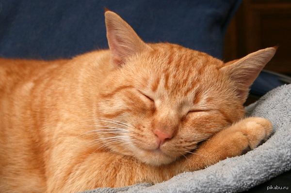 """Просто кот, добавленный для поддержки тега """"Кот"""" :) А то из-за Украины и Крыма, он сдал позиции."""