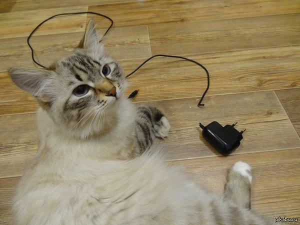 кошка сестры коварна:)