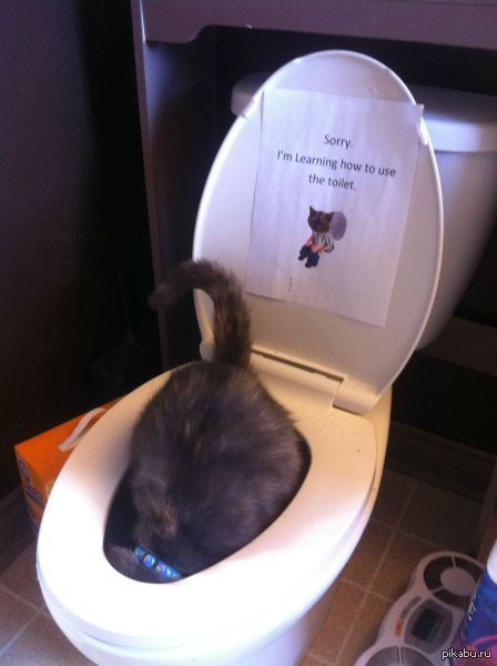 Train your cat to use the human toilet