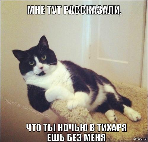 С котом на кухню мы идем