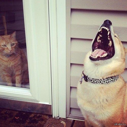 Когда я вижу своих ровесников за дверью военкомата Эй, военком, найди меня по IP :P