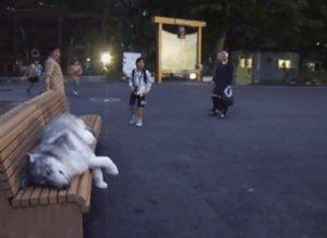 Ничего необычного, просто волк устал и решил прилечь на скамейку..