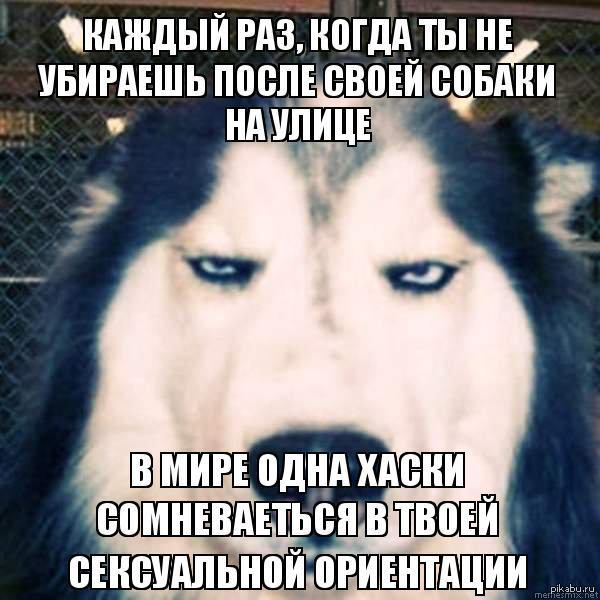 Давайте не разочаровать хаски, и станем немного ответственнее:) Во многих странах не убирать после своей собаки - стыд и позор, а у нас это в порядке вещей:(