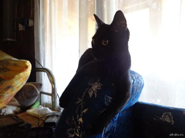 Моя кошка - милое воплощение Сатаны...