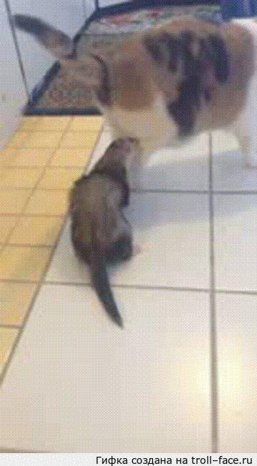 Не шутите с котами, они используют запрещенные приемы