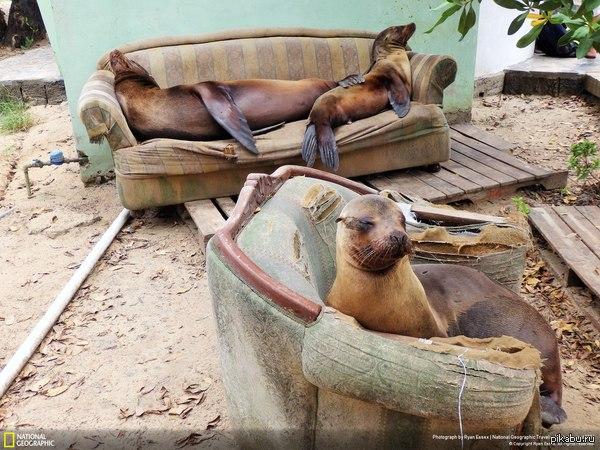 Не обращай внимания это просто тюлени, которые спять на диване