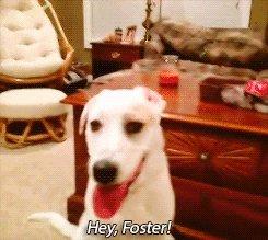 Эй,Фостер! Завтра мы едем в вет клинику и отрежем тебе шары