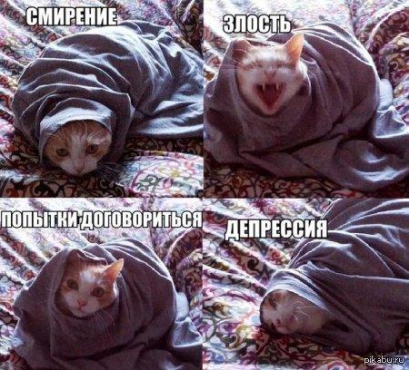 Настроения кота