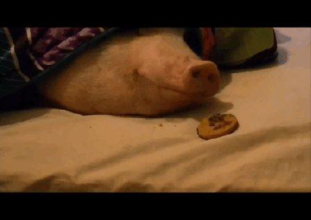 Как видит меня моя мама,когда я ем в кровати