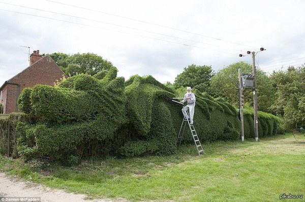 Ограда-монстр Английский садовник превратил свою ограду в 30-метрового дракона.