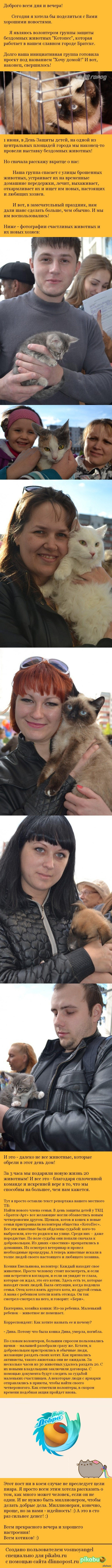О добре, людях и котиках. О том, как мы искали брошенным животным новые семьи.
