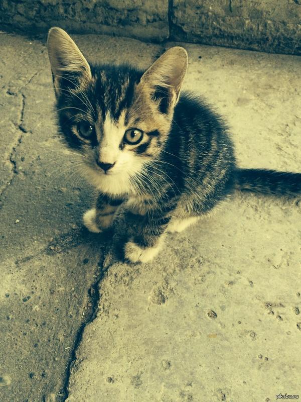 Господа, Петербуржцы. Спасите котенка.  . Подбросили в парадную.Два котенка, кот и кошечка. Совсем маленькие,. Не оставьте на растерзание, пикабушники, поможем братьям меньшим. http://vk.com/id7790709.