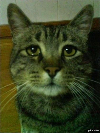 Картинки прости коты