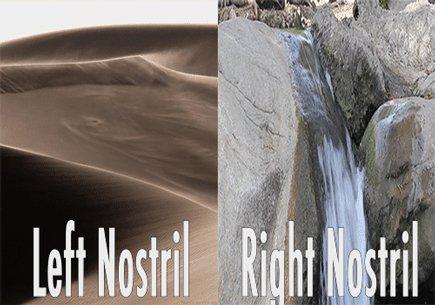 Нос во время насморка Левая ноздря/правая ноздря