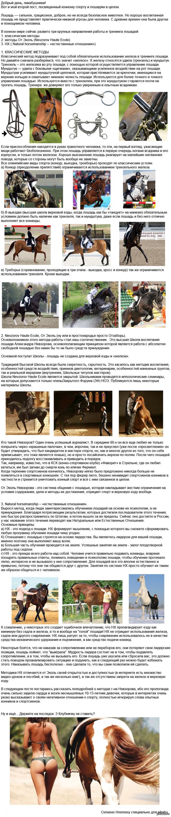 Методы тренинга лошадей. Решила рассказать о коняшах пикабу.Может кому-то будет интересно с: