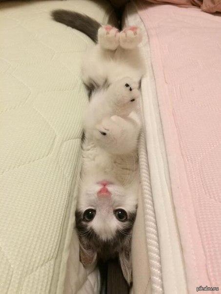 КотаЗаяц Когда подруга скинула, подумал что это заяц или кролик, потом понял что это котик :3
