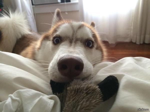 Сегодня я сказал своей собаке, что она приемная