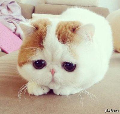 cat defecating indoors