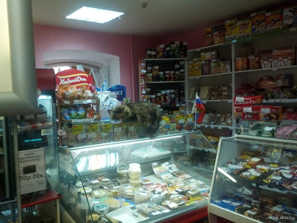 Котяра в магазине