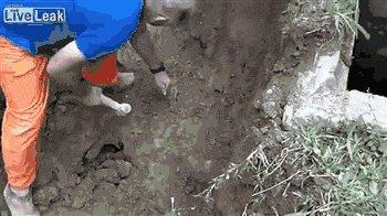 Спасение собаки от упавшего щебня и мусора