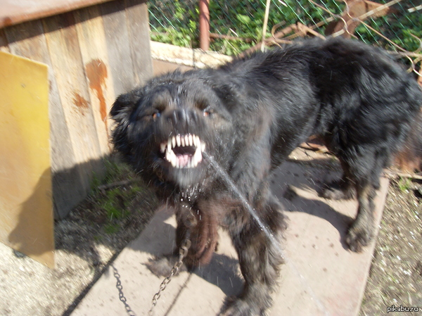 Мой пёся. Не любит, когда в него брызгают водой.