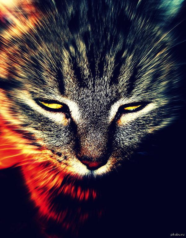 Моя кошка призывает сатану