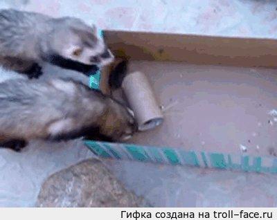 Не того зверя завели Вчера видела пост, где кот запертый на балконе и возле него вольно гуляющие мыши.