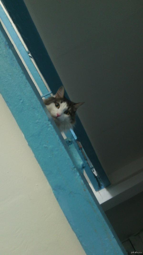 погладил соседского котэ, а он вот так на меня каждый разтеперь смотрит.