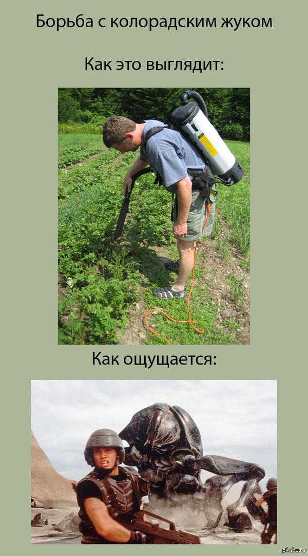 Колорадские жуки Картошководы поймут