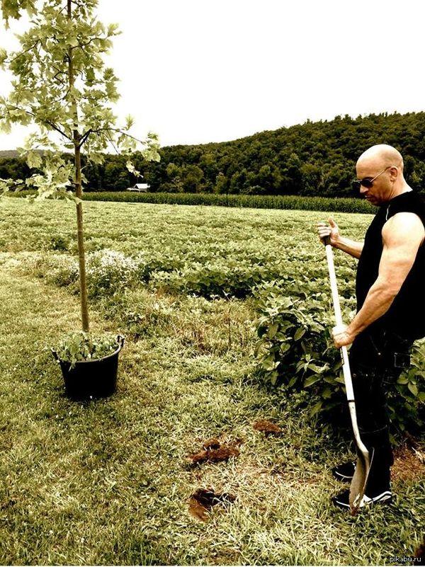 """Вин Дизель из серии """"посади дерево для Грута"""""""