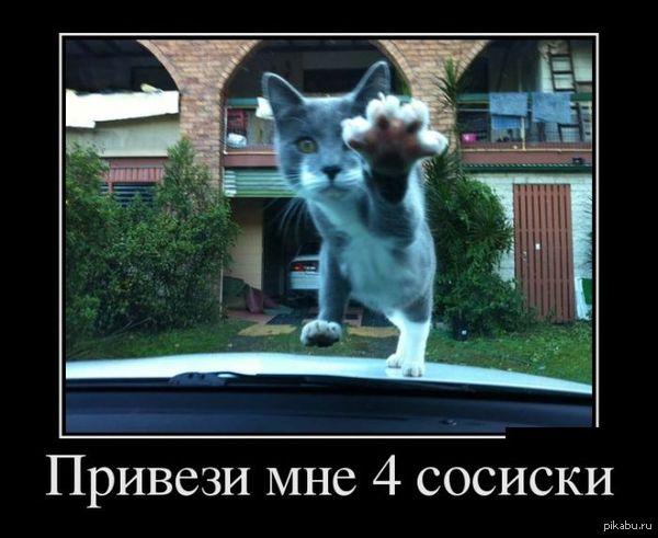Разве ему откажешь? ))))