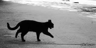 Мне уже 20 лет,а я до сих пор не могу чувствовать себя спокойно после того, как черная кошка перебежала мне дорогу :(