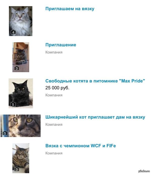 Просто хотел посмотреть цены на мейнкунов на авито, а нашёл какой то сайт знакомств для кошек.