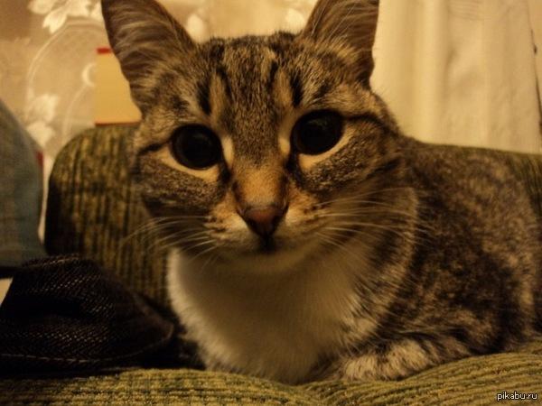 """Котенька Раз уже пошла такая песня... Этой кошечке 11 лет, но каждому новому гостю в нашем доме приходится объяснять, что """"котёнку"""" уже на пенсию пора))"""