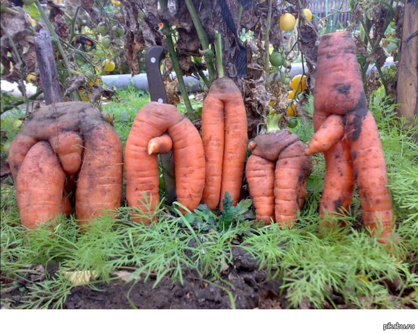 В моркови много витаминов ! Основной - витамин ю.