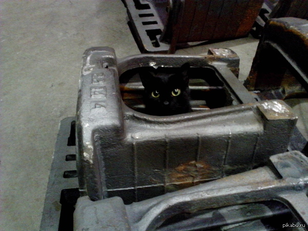 Привычки не меняются. Домашние коты сидят в коробках, наш  сидит в литье.