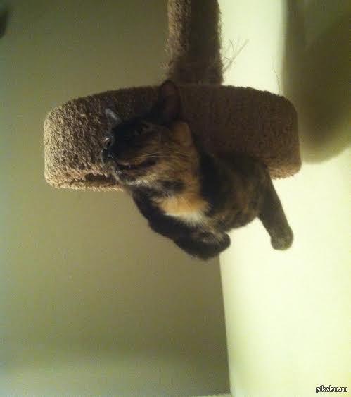 """""""Друг прислал это фото, с подписью """"Наконец-то котомагнит, который я изобрел, работает!!!"""""""