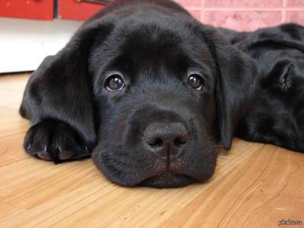 У собаки должны быть друзья!  Друзья, если у вас есть собака - прошу вас пройти анонимный опрос который займет не более 5 минут, но очень поможет. Ссылка на опрос в комментах.