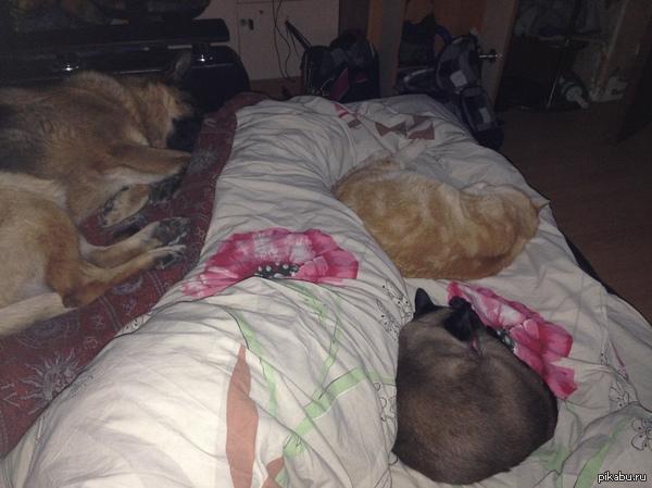 Так я сплю. Приходиться протискиваться между развалившимися на кровати домочадцами.