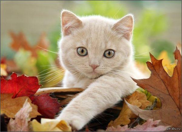 Больше котиков! ^^ Пикабу, что за фигня? Листаю горячее и... почти нет котеек! Как так, ребята? :(