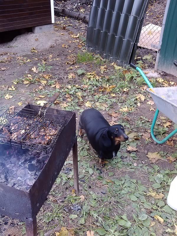 наш пёсик ждет свои косточки Толстый, потому что живет с бабушкой :)